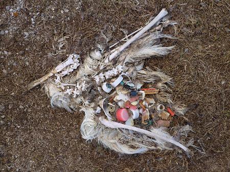 Plastics in the Stomach of ocean Birds